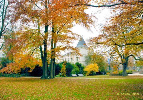 ad van halem - herfst in park eekhout