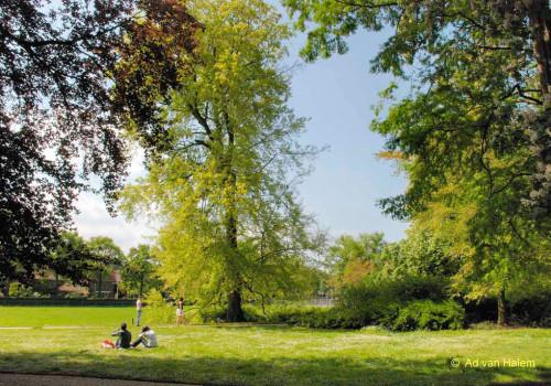 ad van halem - zomer in park eekhout