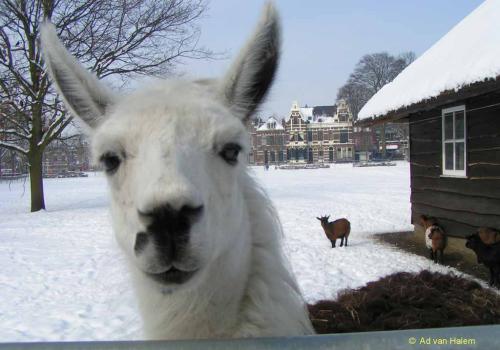 ad van halem - winter in park eekhout