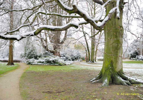 ad van halem - winter in park eekhout